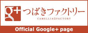 つばきファクトリー Google+ページ